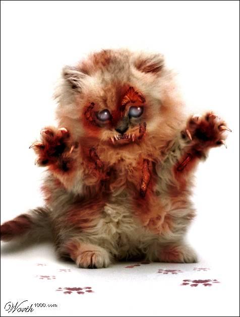 http://thelemonspank.files.wordpress.com/2008/10/zombie-cat.jpg